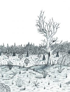 Cover art for Elizabeth's final collection of essays, drawn by her brother Elliot Ensink, featuring a scene from Pierce Cedar Creek Institute.